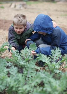The role of gardening in Waldorf education