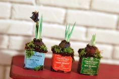 Cute flower bulbs in tea boxes...