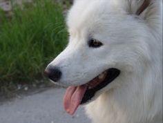 Perché il Flea Medicina Fai un respiro cane rame che sente l'odore?