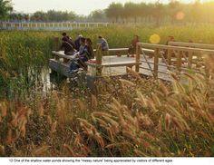 Qiaoyuan_3.jpeg (1650×1275)