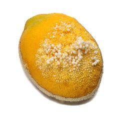 bernhard-stimpfl