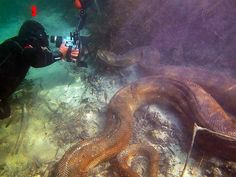 Mergulhadores estrangeiros captam imagens subaquáticas de sucuri (Foto: Daniel De Granville / Photo in Natura)
