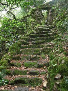 visitheworld:  Escadaria misteriosa, Serra do Bussaco, Portugal (by rgrant_97).