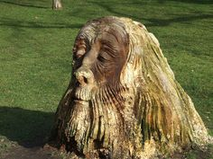 Carved Tree Face by Fields of View