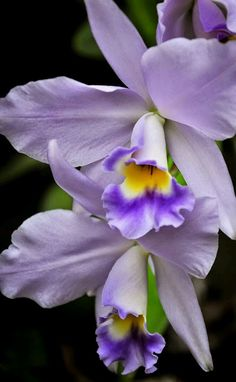 Purple flowers are a great way to add interest to your yard or landscape. See some of our favorite purple garden flowers! Flowers Nature, Exotic Flowers, Tropical Flowers, Amazing Flowers, Purple Flowers, Colorful Flowers, Beautiful Flowers, Purple Orchids, Send Flowers