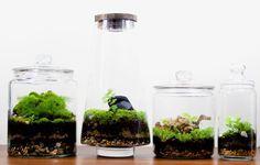 Terrarium Terrarium Plants, Green, Decor, Decoration, Decorating, Deco