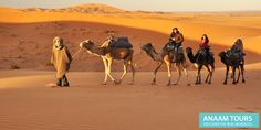 Moroccan Desert: Best for Camel Trekking  Book with Anaamtours for your Moroccan Camel Trekking tour and enjoy with the great moments of your life on the beautiful sights of Sahara desert the largest desert of World. http://www.anaamtours.com/blog/145-best-camel-trekking-through-the-moroccan-desert.html  #Saharadesert #Moroccotour #Cameltrekking