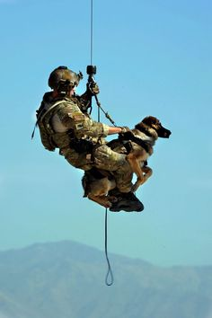 Military Working Dogs, Military Dogs, Police Dogs, Military Service, Military Surplus, Military Life, Military Style, War Dogs, Love My Dog
