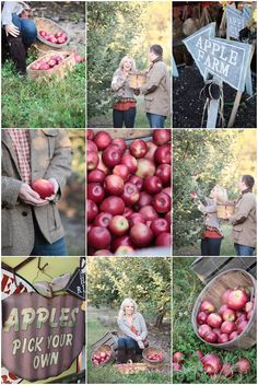 I would love a photo shoot in an orchard. How fun!
