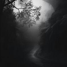Photographie, Numérique dans Nature, Végétal, Arbre, forêt - Image #485924
