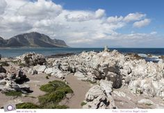 Südafrika #7: Die Pinguine von Betty's Bay (Stony Point) Stony Point, Beach, Water, Photos, Outdoor, Gripe Water, Outdoors, Pictures, The Beach