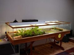 "A turtle table mentioned on Turtle Times forum:   http://goo.gl/4dzjo  Posted by user ""portsample"":  http://goo.gl/e2lnV    More in these posts: http://goo.gl/3n520    http://goo.gl/rRJ3k  (These links are not spam, silly Pinterest.)"