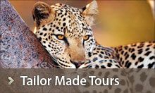 Plan your African Safari with African Travel Gateway who have been tailoring seamless tours & safaris for over twenty years. African Safari, Travel Tips, Southern, Tours, Activities, Animals, Animales, Animaux, Travel Advice