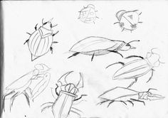 My rough sketching of various bugs