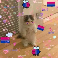 Bisexual Pride, Gay Pride, Bi Flag, Cat Icon, Gay Aesthetic, Cute Gay, Kawaii, Rainbow, Memes