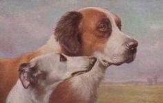 St. Bernard and Greyhound, C Reichert 1910 Postcard