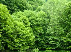 Puterea terapeutica a copacilor Spirit Soul, Natural Health Remedies, Therapy, Herbs, River, Nature, Outdoor, Outdoors, Naturaleza