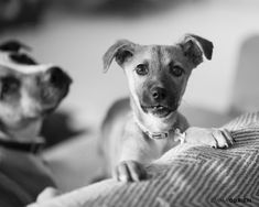 Here's what you need to know before you bring a new puppy home from a shelter.    Dog photography by Emma O'Brien award winning portrait photographer Shelter Puppies, Rescue Puppies, Dogs And Puppies, Dog Photography, Dog Portraits, New Puppy, Photoshoot Ideas, My Images, Portrait Photographers