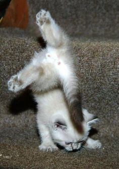 kitties can do gymnastics too! ;)