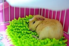 10 DIY's For Your Guinea Pig Cage