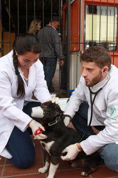 Cães de rua recebem tratamento em terminais de ônibus - Álbum - Prefeitura de Curitiba