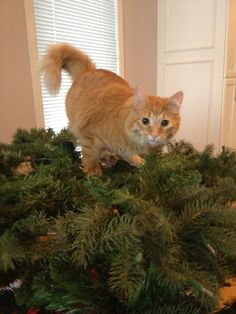 No...I didn't knock the tree down.  It fell...yeah, it fell all by itself.