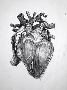The Human Heart (concentration project) | Flickr - Photo Sharing!