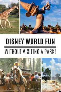 37 Things to Do At Disney World that Don't Require Theme Par.- 37 Things to Do At Disney World that Don't Require Theme Park Admission! Fun things to do at Disney World without visiting the parks! Disney World Honeymoon, Disney World Tickets, Disney World Vacation Planning, Orlando Vacation, Disney World Parks, Walt Disney World Vacations, Disney World Resorts, Disney Trips, Orlando Florida