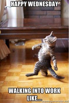 walking cat - HAPPY WEDNESDAY WALKING INTO WORK LIKE....