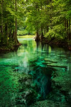 Little Devil Spring along the Santa Fe River in North Florida. Nature Aesthetic, Travel Aesthetic, Beautiful Places To Travel, Beautiful World, Nature Pictures, Cool Pictures, Landscape Photography, Nature Photography, Fantasy Landscape