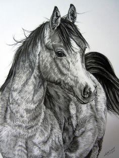 Horse paintings and horse portraits in soft pastels and charcoal - commissioned works by katja sauer