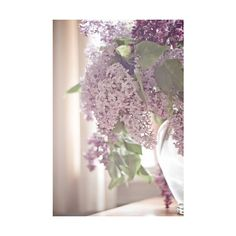 Lilacs ❤ liked on Polyvore featuring backgrounds, flowers, pictures, plants and purple