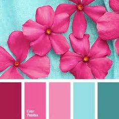 Image result for fuchsia and aqua color scheme