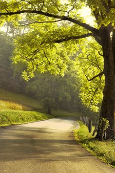 ~~Morning Drive | Cades Cove, Great Smoky Mountains National Park | by Andrew Soundarajan~~
