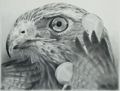 Eric Yahnker, Shocked Hawk