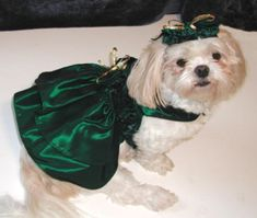 When Irish Dogs Are Smiling: 12 Fun St. Patrick's Day Dog Costumes