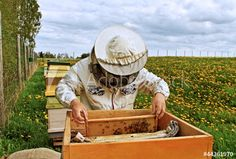 Beekeeper stock photos and royalty-free images, vectors and illustrations Bee Keeping, Royalty Free Photos, Clip Art, Stock Photos, Bees, Image, Beekeeping, Flowers, Pictures