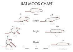 Rat mood chart - emotional intelligence training