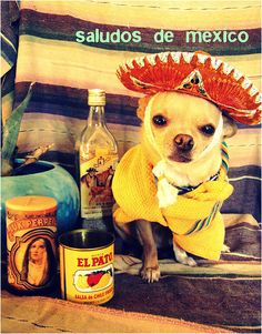 My other date to your wedding. He's clearly in Mexico and I'm working on getting him a visa to the U.S.