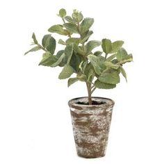 Potted Mint Plant