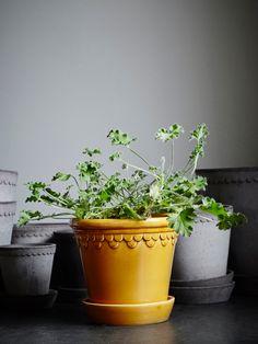 Copenhagen producerades i Köpenhamn under 1800-talet efter att ha hittats i en nedlagd plantskola i Toscana. Nu är den återigen i produktion i Lucca, Toscana. Det går bra att plantera direkt i krukan eftersom den har dräneringshål i botten och ett fat som samlar upp överblivet vatten. MÅTT: Ø: 16 cm H: 14 cm MATERIAL: Terrakotta, Glasyr