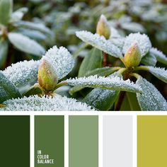 Adorable and fresh palette. Numerous green shades bring us closer to nature. It seems like you walk in the forest, inhale the smell of leaves, grass, trees. House Color Schemes, Colour Schemes, Color Patterns, Color Combinations, Color Balance, Color Harmony, Balance Design, Palette Design, Design Seeds