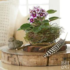 Indoor Benches - A Single Is Ideal For Creating A Cozy Den House A Decorative Bird's Nest Is The Perfect Vessel For Small Plants. Pair With Other Woodland Accessories, Like Rustic Wood Slices, Twigs, And Feathers, For A Simple Decoration. Faux Plants, Small Plants, Indoor Plants, Indoor Gardening, Woodland Decor, Rustic Decor, Rustic Wood, Saintpaulia, Ceramic Birds