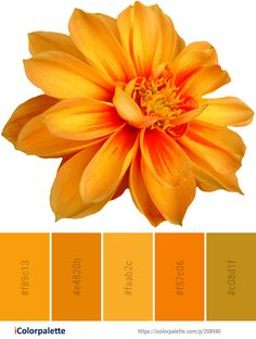 Color Palette Ideas from Flower Yellow Orange Image