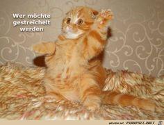 lustiges Bild 'Wer moechte.jpg' von Funny53. Eine von 14329 Dateien in der Kategorie 'witzige Bilder' auf FUNPOT.