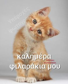Funny Greek Quotes, Great Words, Good Morning, Cute Pictures, Cats, Mornings, Animals, Happy Wednesday, Buen Dia