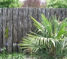 Build a Ponga Log Fence, an article on Auckland Landscape Supplies - Read all about Build a Ponga Log Fence here. Landscaping Supplies, Garden Landscaping, Log Fence, Living Fence, Garden Trees, Back Gardens, Native Plants, Hedges, Garden Design