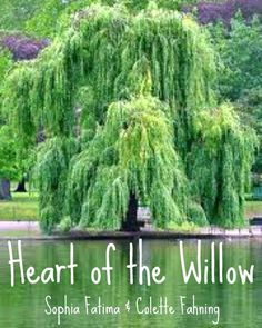 Book Cover for Heart of the Willow