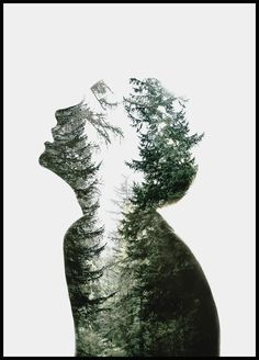 Dreams of Nature - Shop this print at Poster Store