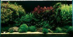 Похожее изображение Cool Wallpaper, Aquascaping, Aquarium, Canning, Nice, Plants, Blog, Inspiration, Photos